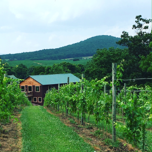 things to do near River Bluff Farm B&B - visit De Mello Vineyards